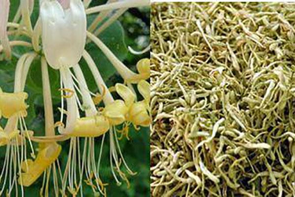 ruseki viêm nhiễm phụ khoa từ thảo dược